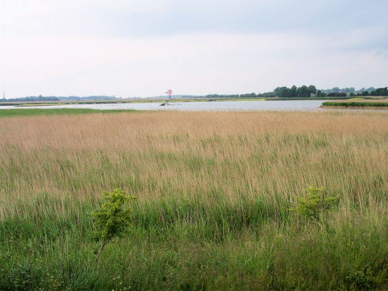 Fehmarn: Das Flügger Watt