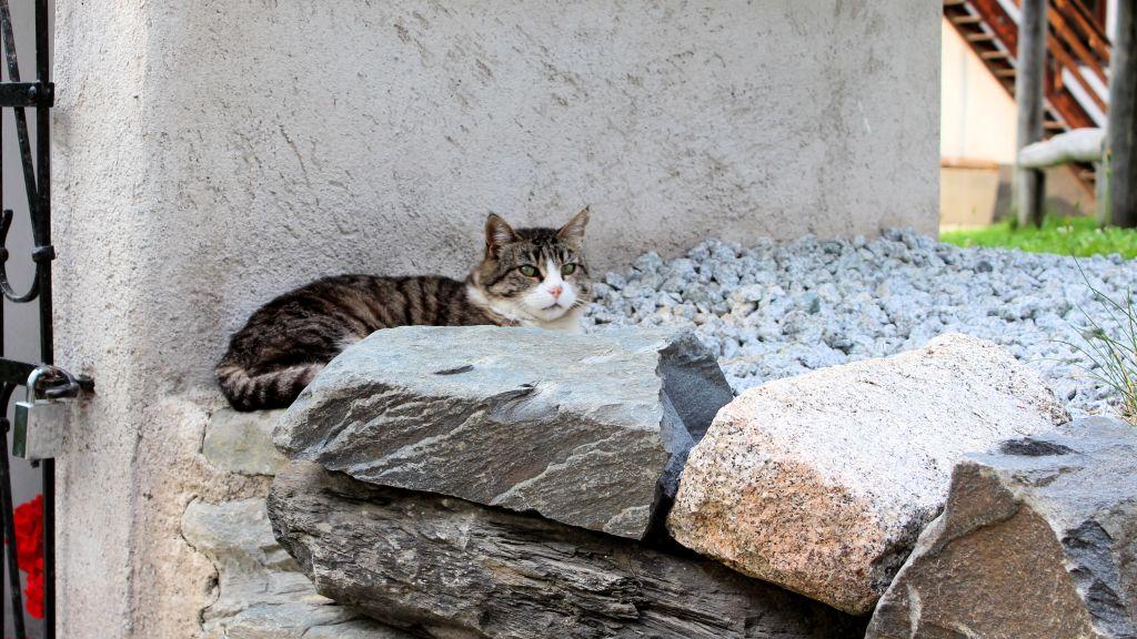 Südtiroler faulenzer Katze entdeckt auf unserer Familienwanderung