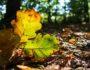 Buntes Herbstblatt