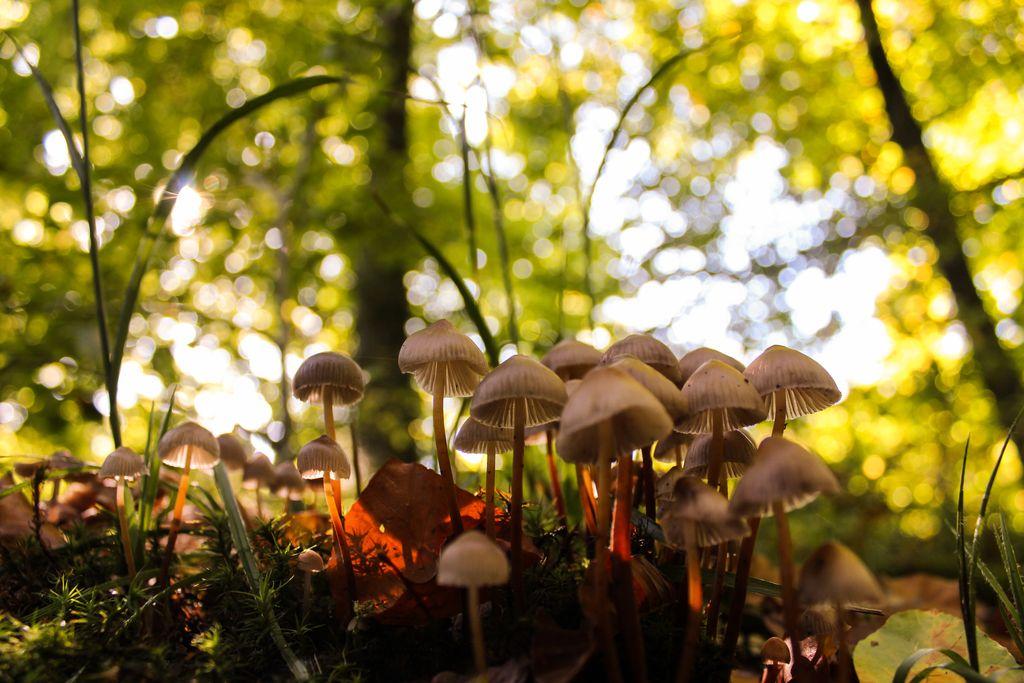 Herbststimmung im Solling