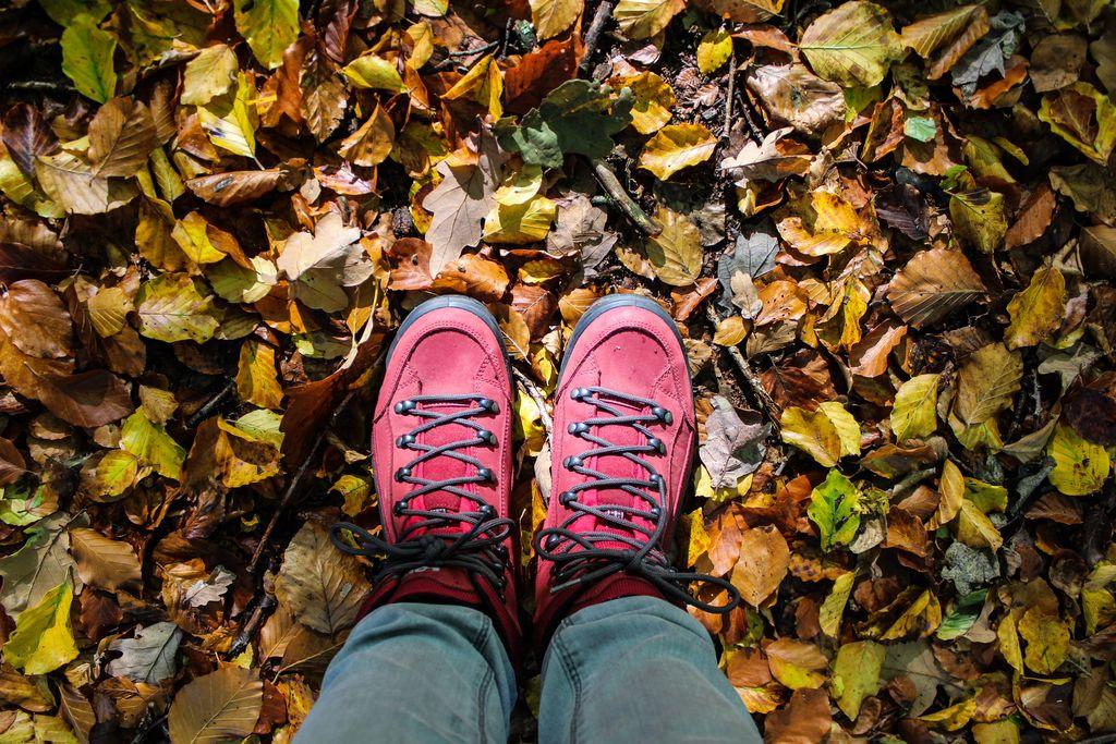 Herbstwanderung im Solling