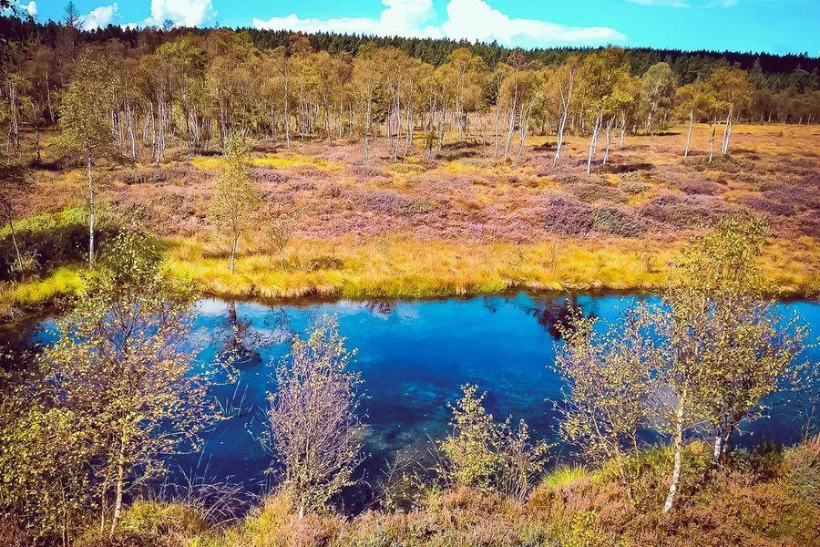 Hochmoor des Naturparks Solling
