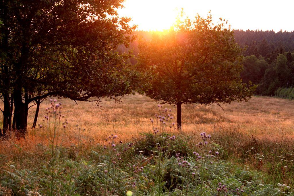 Sonnenuntergang in Südniedersachsen