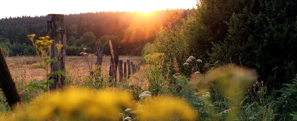 romantische Stimmung im südniedersächsischen Naturpark