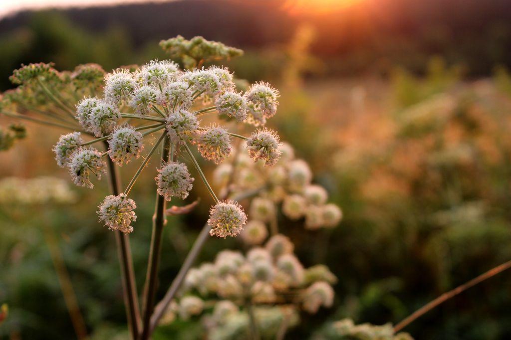 Blütenromantik im Naturpark Solling-Vogler